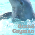 Dolphins and Turtles in Grand Cayman | mybigfathappylife.com