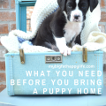 What You Need Before You Bring a Puppy Home | mybigfathappylife.com
