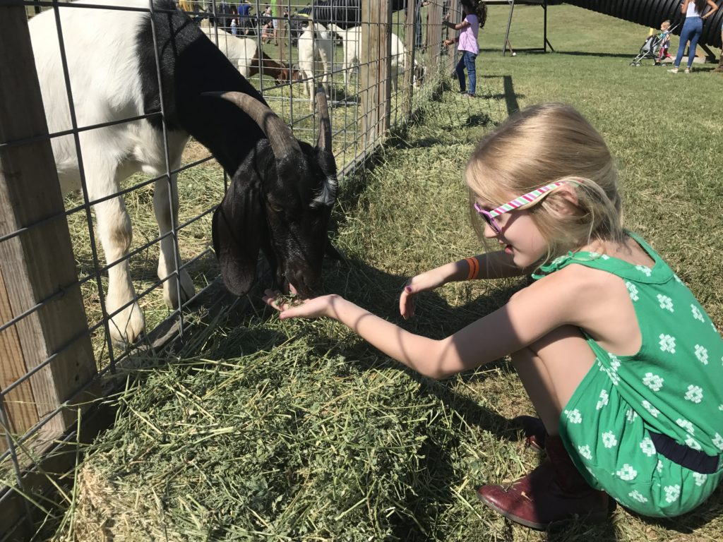 Barton Hill Farms Fall Festival and Corn Maze - Austin, TX | mybigfathappylife.com