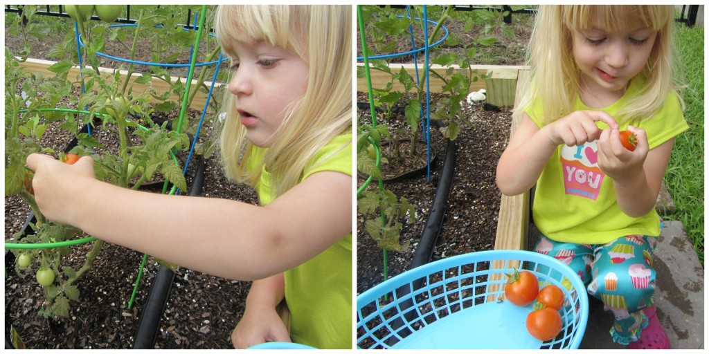 gardening with a toddler | mybigfathappylife.com