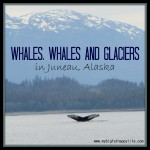 Whales, Whales and Glaciers in Juneau, Alaska
