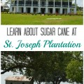 Learn About Sugar Cane at St. Joseph Plantation in Vacherie, Louisiana | mybigfathappylife.com