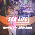 6 Things You Must See at SEA LIFE Minnesota Aquarium, Mall of America, Bloomington, MN - Twin Cities| mybigfathappylife.com