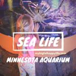 6 Things You Must See at SEA LIFE Minnesota Aquarium