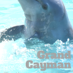 Dolphins and Turtles in Grand Cayman