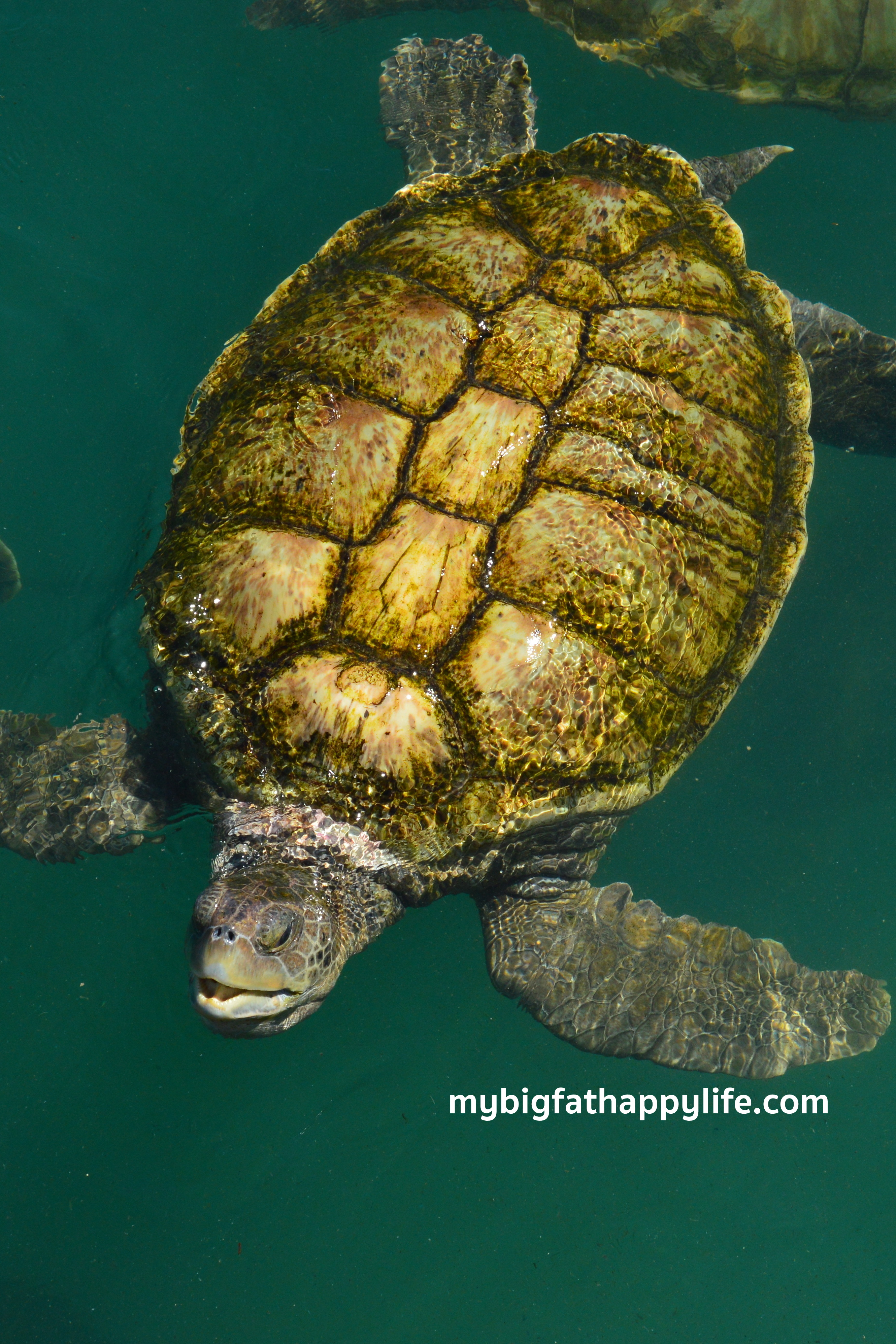 Dolphins And Turtles In Grand Cayman My Big Fat Happy Life