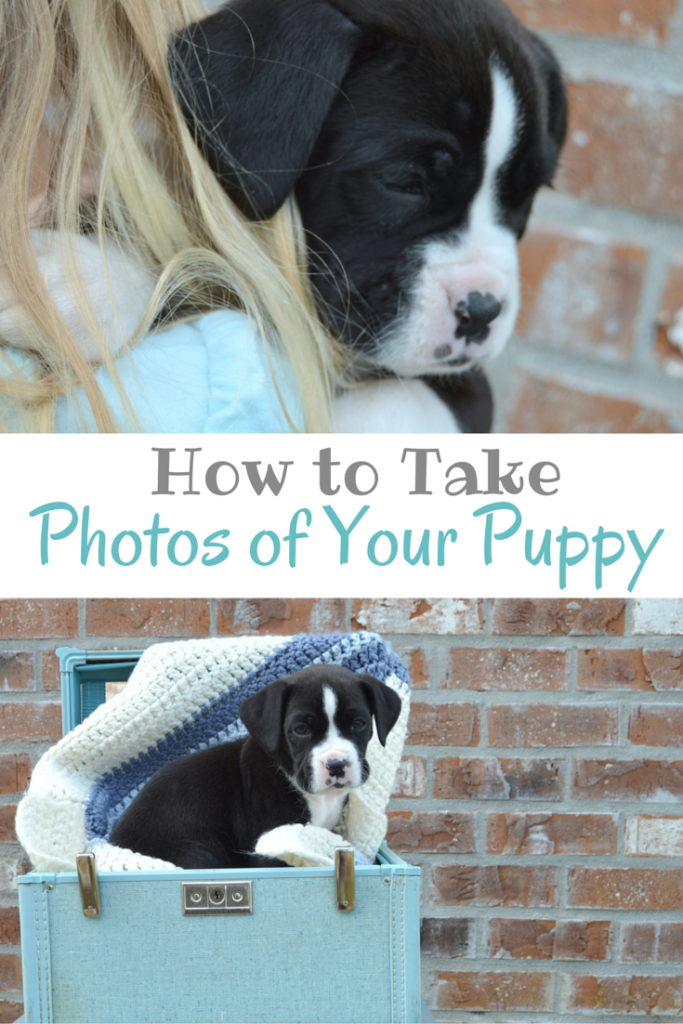 How to Take Photos of Your Puppy; Tips for Taking Photos of Your Puppy | mybigfathappylife.com