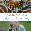 How to Make a Cake for Your Dog | mybigfathappylife.com