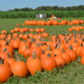 Barton Hill Farms Fall Festival and Corn Maze - Austin, TX | mybigfathappylife.com