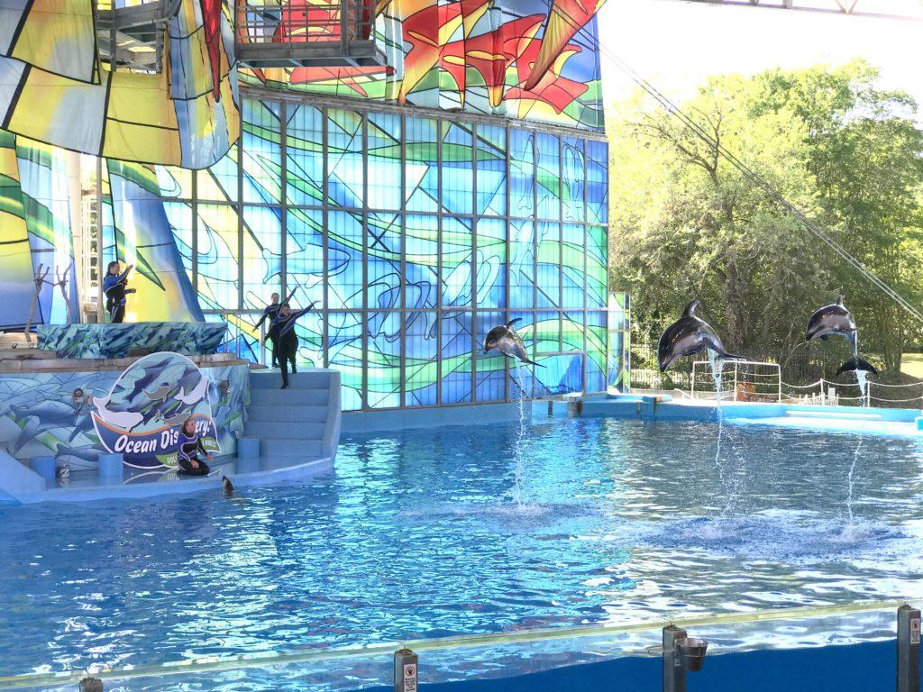 6 Must Visit Attractions At Seaworld San Antonio My Big Fat Happy Life